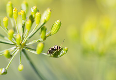 (lordamien) Tags: nature canon eos sigma insecte 105mmf28 60d