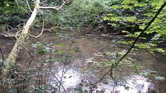 Old Alresford (trevormulder666) Tags: nature wildlife rspb river hampshire landscape waterfall watercress pond oldalresford stream blog sherfieldtwitcher facebook