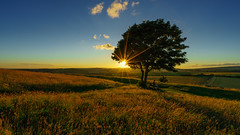 Under the lone tree at sunset (TanzPanorama) Tags: nature sunset sunlight sunstar england westsussex cissburyring vista hill tanzpanorama flickr sonya7ii ilce7m2 sony tree fe1635mmf4zaoss variotessartfe1635mmf4zaoss zeiss glow evening goldenhour lonetree landscape scenery grass field 09ndgrad leefilter lee