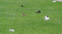 DSC_3411 (mavnjess) Tags: 15 june 2016 vicenza italy italia coniglio coniglios rabbit rabbits bunny bunnies