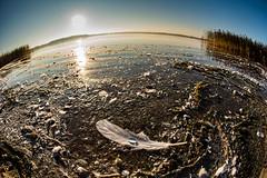 """My world"" (olevikshaaland) Tags: fisheye sunrise feather water drops nikon d750"