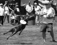 Dog Days, Cantigny Park. 12 (EOS) (Mega-Magpie) Tags: canon eos 60d outdoors outdoor cantigny park wheaton dupage il illinois usa america people person man guy dude bw black white monochrome pet dog puppy cute