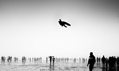 ||The flying visitor|| (SouvikMetiaPhotography) Tags: people travel flickr flyingbird flying blackandwhite morning monochrome asia india seascape landscape sea streetphotography documentary nikon contrast silhouti gathering holiday