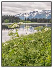 Mehan Lake 3 (imageseekertoo (Wendy Elliott)) Tags: wendyelliottphotographs wendyelliott wendyelliottphotography britishcolumbia britishcolumbiacanada mehanlake mehanlakerestarea stewartcarriarhighway highway37 lake bclake yukontrip snowcappedmountains snowcappedmountainswithlake