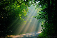 early morning mist (Neal J.Wilson) Tags: country road lane trees mist misty sunlight sunrays beams sunbeams jutland denmark atmosphere moods empty goldenhour nordic scandinavia