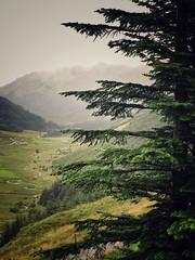 West Highlands, Scotland (Catherine Restivo) Tags: mobitog scotland snapseed