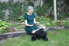 Tibi Likes H's Socks (m.gifford) Tags: tibi whoodle puppy ourpuppy hazel