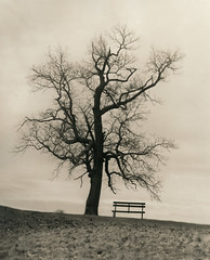 Waiting for the Spring to come (Alexander Tkachev) Tags: silvergelatindarkroomprint landscape largeformat crowngraphicspecial 4x5 hp5 alexandertkachev darkroom thioureasepia ilfordfbwtpaper blackwhite