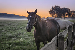 Equine Dawn (zuni48) Tags: horses fence woodfence morninglight sunrise dawn rural hff