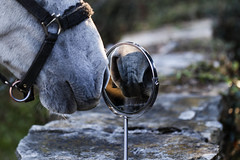 Vanidad.... - Vanity.... (Tate Kieto) Tags: animal horses reflects