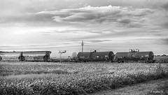 Brian_Shot-line Idle 1a_LG BW_091816_2D (starg82343) Tags: 2d brianwallace country field train traincars traincontainers clouds crop farmland rural grayscale monotone blackandwhite bw