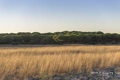 Parque Nacional de Doana (Huelva) (Maria Dolores Blesa) Tags: rboles paisaje doana parque natural