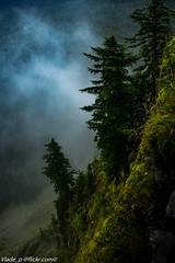 In the fog (TesterV) Tags: fog foggyforest foggy trees mountains columbiarivergorge sigma24105mmf4 sonya6000