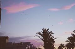 Azayla (90sFlav) Tags: maroc morocco asila tanger tangier sunrise sunshine sunset chill analogue vibe vapor vaporwave aesthetic film 35mm palm natural snooth feel lofi lomo art outdoor bird fly dream skylight assilah