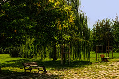 Empty benches (s_gulfidan) Tags: bench saariysqualitypictures trees 200faves