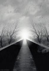 End of Road (slivinska) Tags: bridge afterlife afterdeath lights fineart photomanipulation storyteller tree road blackandwhite bw monochrome heaven sky birds alinasliwinska alina sliwinska amarillis