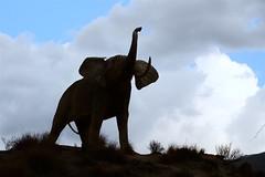 Silueta de Elefante (eustoquio.molina) Tags: elefante silueta tabernas almera andaluca