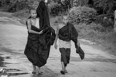 Monks in Inle Lake (virtualwayfarer) Tags: inlelake myanmar burma southeastasia asia shanstate shan monk monks buddhist buddhistmonks religion dailylife streetphotography street canon6d canon village villagelife indietravel budgettravel indietraveler budget nyaungshwetownship nyaungshwe