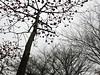 東豐路的木棉盛開 (judie35) Tags: tree 木棉