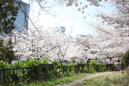 桜を背にして