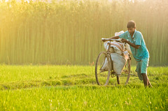 The Countryside (Dilwar Mandal) Tags: india countryside nikon village paddy cycle gram nikkor filed cultivation westbengal murshidabad d5100