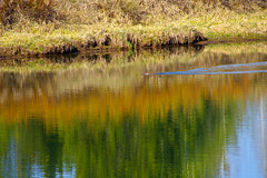 Snake River Reflections (bhophotos - not for much longer) Tags: travel usa green nature water colors reflections river landscape geotagged spring pentax snakeriver wyoming tetons grandtetonsnationalpark 100300mm gtnp oxbowbend k110d
