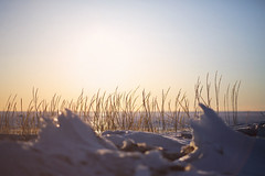 Sunset (tropeone) Tags: winter sunset red sky reed yellow finland reeds spring bokeh 85mm balticsea 2013 gulfofbothnia canonef85mmf18usm lohtaja ohtakari canoneos5dmarkiii 5d3