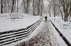 along the footpath (Rachel Dunsdon) Tags: trees snow woods footpath wgc
