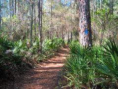 Morningside Nature Center (floridahikes) Tags: florida hiking gainesville trail morningside naturecenter alachua floridahikes