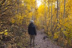 Hiking Aspen Colorado Fall Colors (vix227) Tags: man tree fall leave colors yellow bells landscape golden leaf colorado outdoor hiking maroon adventure trail co change hiker aspen