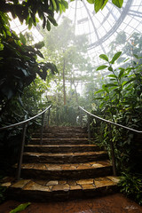Rain Forest Gallery (Zack Podratz) Tags: california ca trees plants nature wet gardens canon garden rainforest lookingup socal greenhouse huntingtonlibrary dome tropical southerncalifornia 16mm botanicalgardens preservation tropicalgarden 1635mm ef1635mmf28liiusm therosehillsfoundationconservatoryforbotanicalscience 5dm3