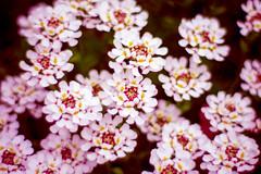 Crazy World (December-Skies) Tags: flowers flower lumix 50mm f14 voigtlander panasonic queenelizabethpark qepark carlzeiss planart bokehlicious gx1
