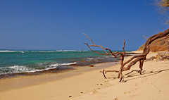 Beach Art (jcc55883) Tags: ocean sky beach hawaii nikon day oahu horizon shoreline cliffs clear driftwood pacificocean shore yabbadabbadoo d40 kaalawaibeach nikond40 diamondheadroad