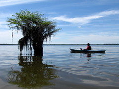 Lowcountry Unfiltered - Lake Marion Ghost Town Paddle - April 2013 (267) (greenkayak73) Tags: friends beagle nature america fun lucy southcarolina adventure kayaking ghosttown mrrussell riverdog lakemarion greenkayak73 randomconnections photopaddling lowcountryunfiltered nitrorev johnatgcc rockscemetery