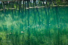 Yansma/ Reflection -2 (Kalem ve Mum) Tags: reflection green nature bolu yeil yansma doa