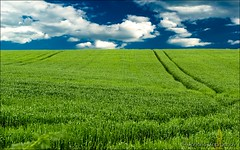 Field (yanzappa) Tags: blue summer sky cloud sun sunlight white plant green nature beautiful field grass weather rural season landscape outside countryside spring colorful paradise day view natural cloudy outdoor farm vibrant background horizon country farming cereal lawn grow meadow sunny scene fresh clear pasture land vista agriculture heavens grassland plain idyllic cloudscape