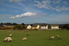 Summer Grazing (Chris*Bolton) Tags: ireland summer sky landscape sheep sunny wicklow grazing rathdrum ballygannon