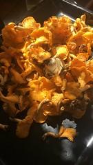 IMG_3866 (Christandl) Tags: pilze schwammerln hausgemacht homemade