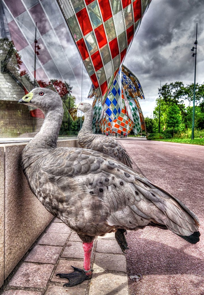 The world 39 s best photos of hdr and oiseau flickr hive mind for Oiseau france
