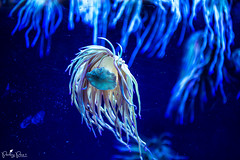 Light blue. (PierluigiPeace) Tags: sea ocean fish aquarium barcelona spain nikon blue light food