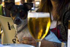 Flecha 3.0 (Jotha Garcia) Tags: animal perro dog retrato portail mascota pet jothagarcia nikond3200 jackrussel beer cerveza summer verano 2016 agosto august