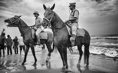 Neighing (Padmanabhan Rangarajan) Tags: ganeshchathurthi immersion visarjan policeman horses horseman chennai foreshore estate festival