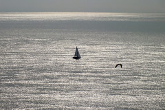 The vast sea (shadowshador) Tags: the vast sea ocean boat boats water bird birds gray flat scape