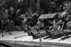 Pygmy Welcoming Party (rowanb73) Tags: disney disneyworld magickingdom adventureland junglecruise outdoor blackandwhite pygmy beach canoes headhunters jungle