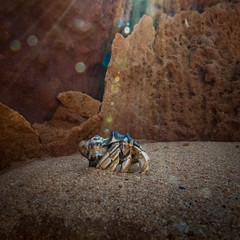 I'm Magical !!!! (--Welby--) Tags: hermit crab canon sx50 broome kimberley beach coast rocks sun light sunlight magical special effect rays glow glitter magic