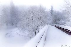 Down the catwalk. Pasarela.  N 127 (Yon Ibarrra) Tags: nieve snow pasarela catwalk invierno winter arana vitoriagasteiz alavaaraba euskadi paisvasco basquecountry espaa spain europa