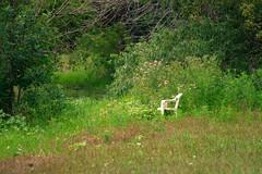 arrowhead lake. july 2016 (timp37) Tags: summer illinois july 2016 chair arrowhead lake palos park