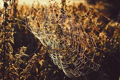 Made During The Night (ukasz Babula) Tags: poland summer autumn september morning early gold warm colours countryside outdoor light golden hour web spider trap texture nature natural landscape sunrise bokeh depthoffield nikon d60 nikkor 1855