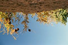 1 (hamedtabaar) Tags: sky wall pomegranate انار آسمان دیوار
