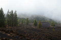 Bruma, pines and lava at Chinyero, Tenerife (Snapjacs) Tags: cloud walking lava hiking pines tenerife bruma chinyero